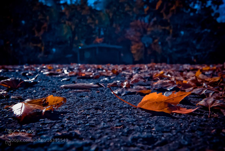 Photograph Fall Season by Aruna Dangol on 500px