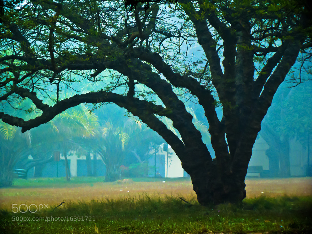 Photograph Enchanting Tree by (GG) Girinath.G  on 500px