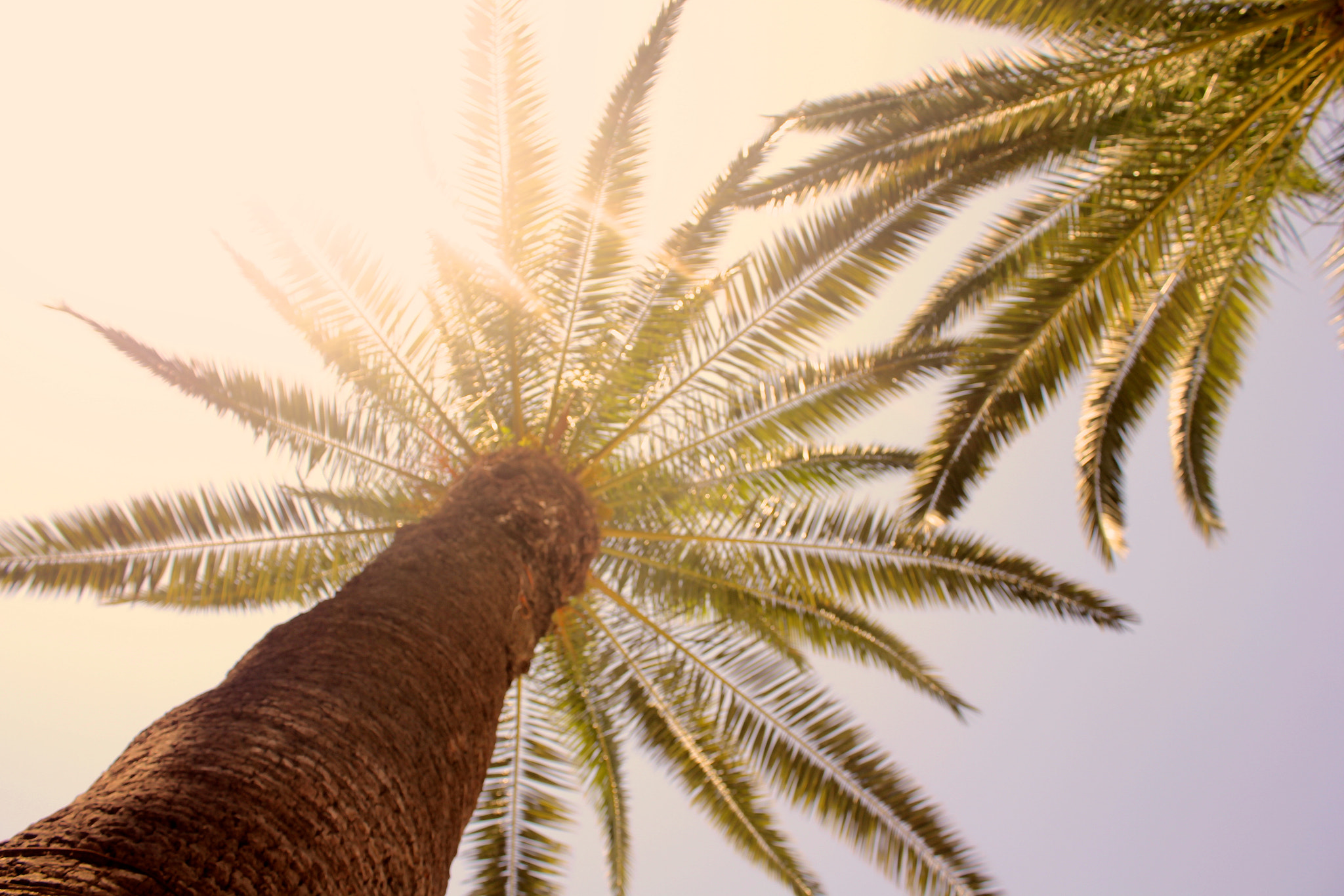 Photograph Palm trees in Algeria Center by Abd  Driss on 500px