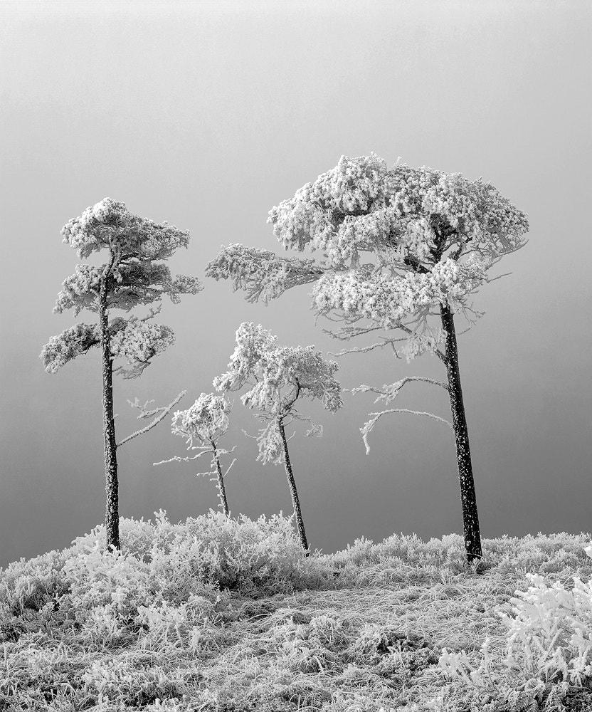 Photograph Family Tree by Ian Cameron on 500px