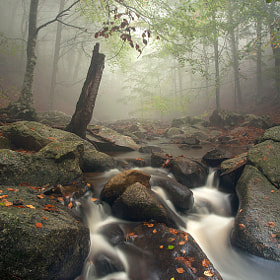 Foggy day by Camilo Margelí (cmargeli)) on 500px.com