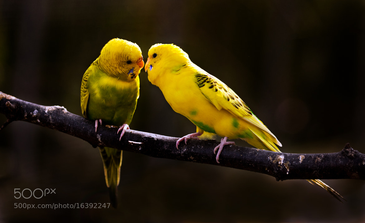 Photograph Love is In The Air by Patty Barker on 500px
