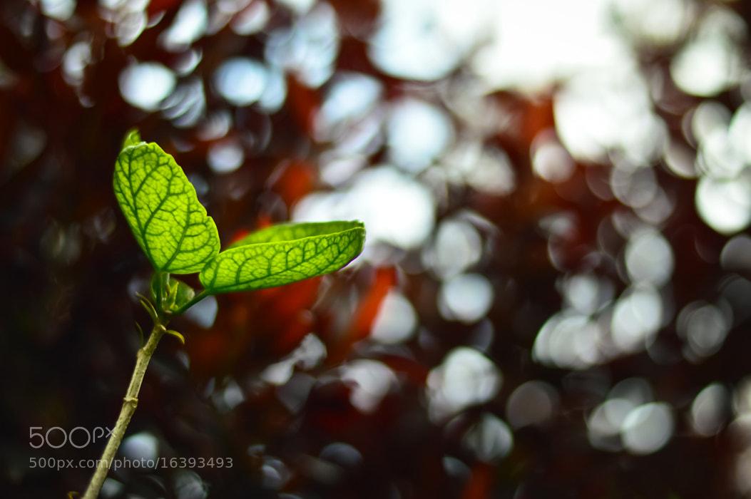 Photograph Go Green by Girinath G on 500px