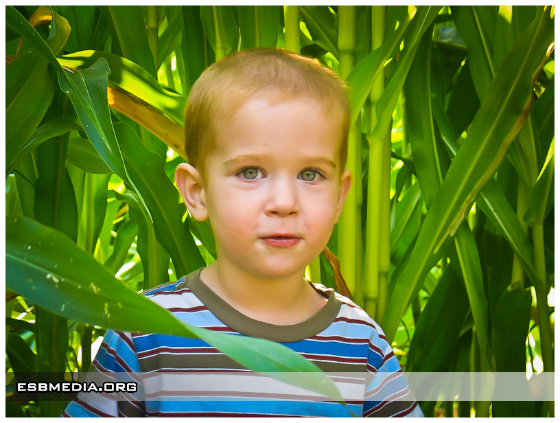 Photograph Ashton in the Corn Field #2 by ESB Media on 500px