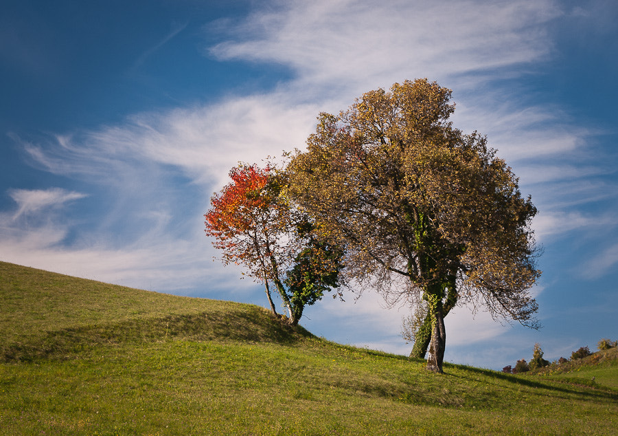 Photograph Colored trees by Brane Kosak on 500px