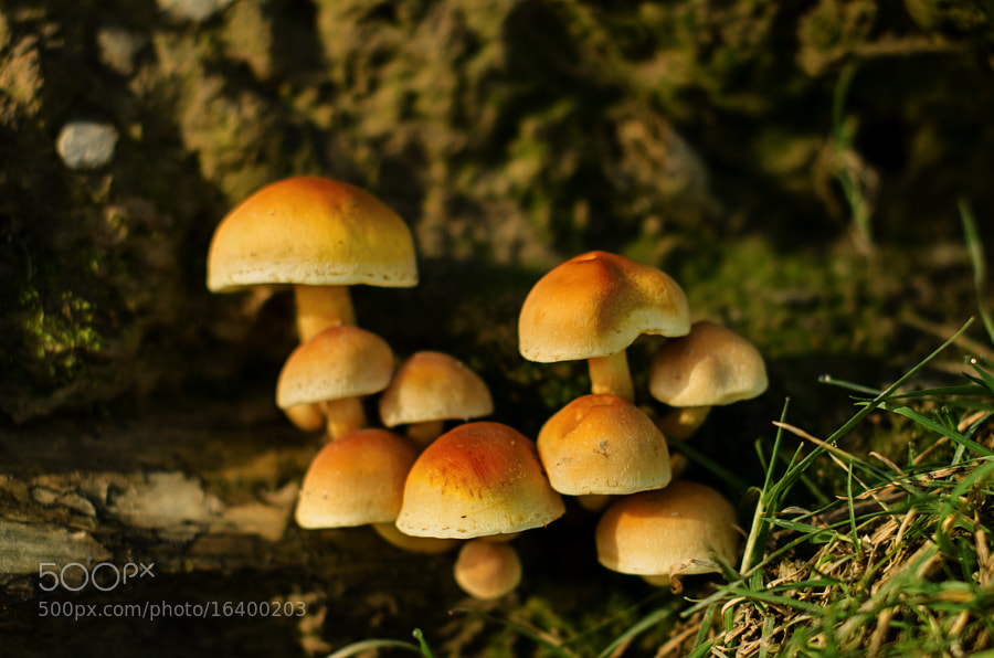 Small group of mushrooms growing inside a tree trunk