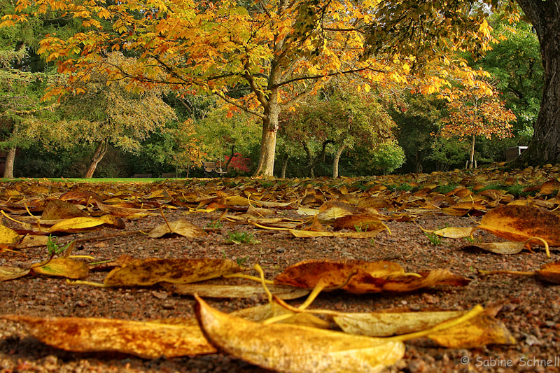 Photograph Autumn by Sabine Schnell on 500px