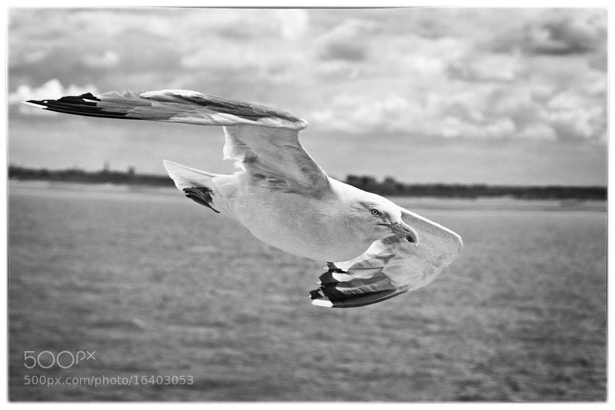 Photograph fly by by Juergen B. Mueller on 500px