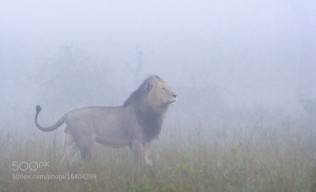 Photograph King in the Mist by Marlon du Toit on 500px