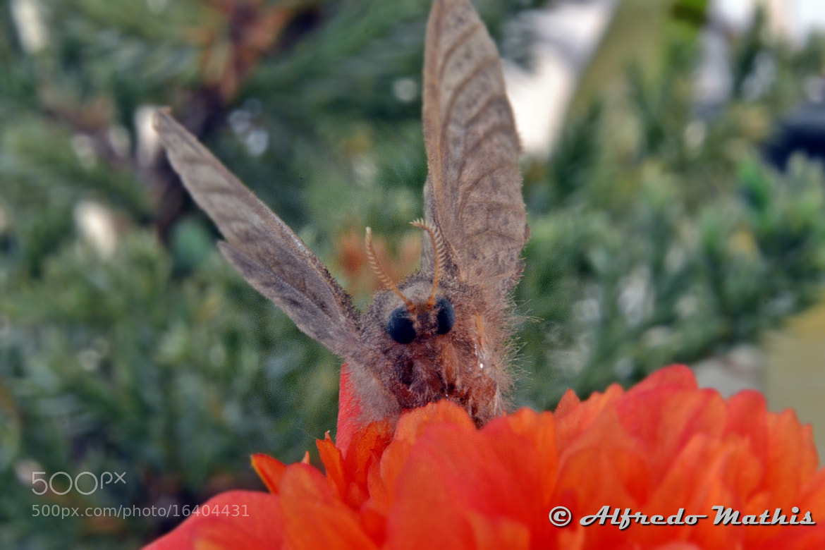 Photograph Mariposa by Alfredo Mathis on 500px