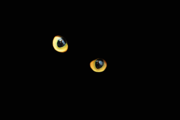 Photograph Cats eyes  by Pablo Romero on 500px