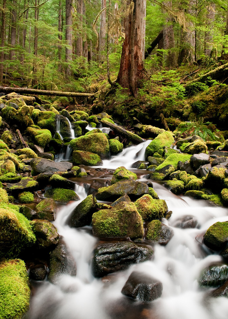 Photograph olympic national park by Sam Scholes on 500px