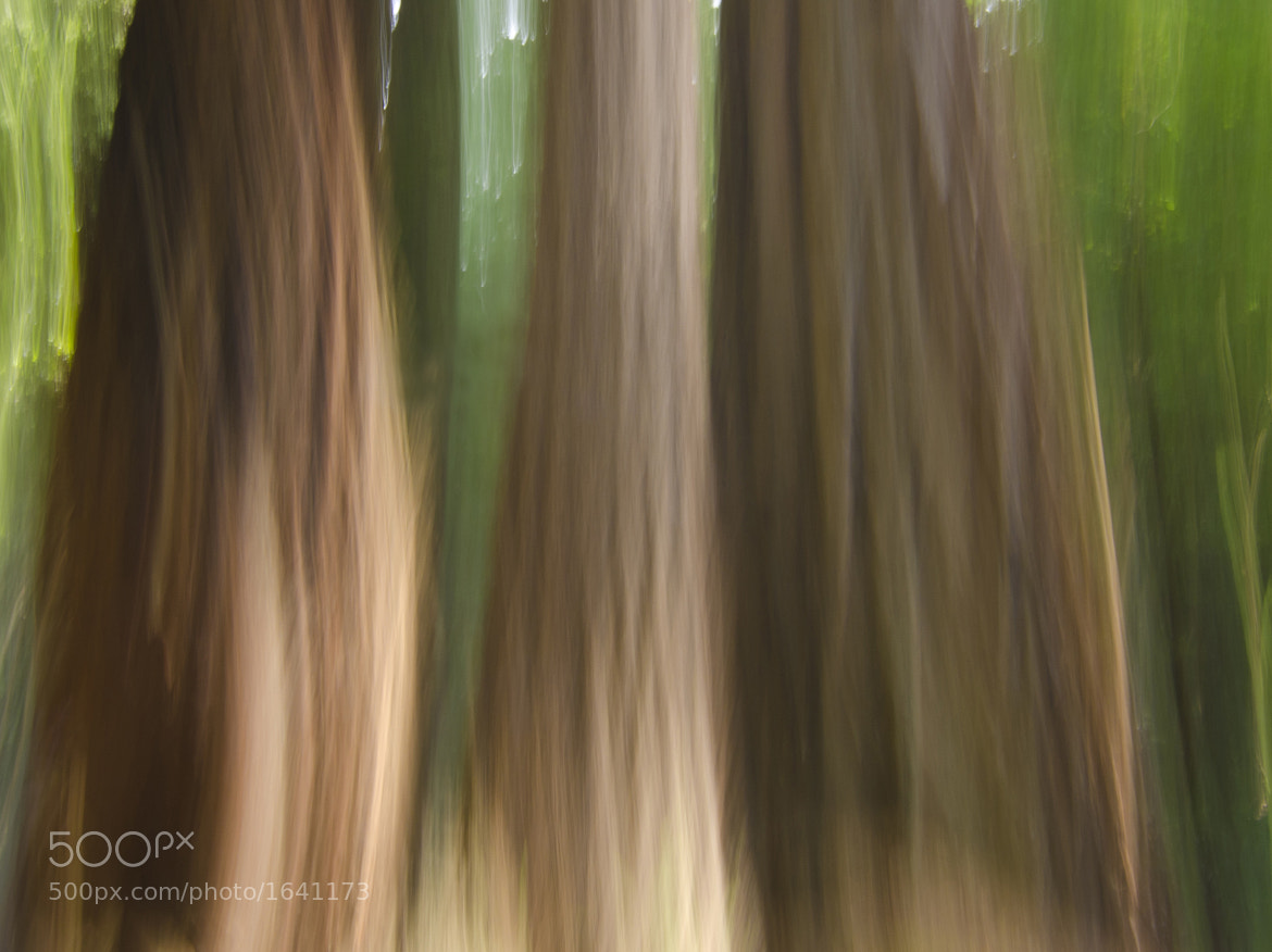 Photograph The Woods by Bill Ratcliffe on 500px