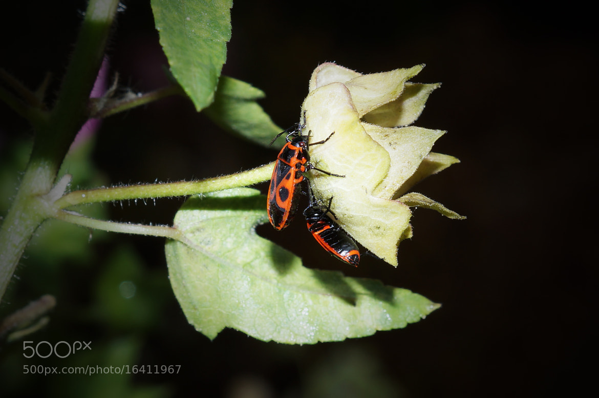 Photograph Insects by Krasimir Hintolarski on 500px
