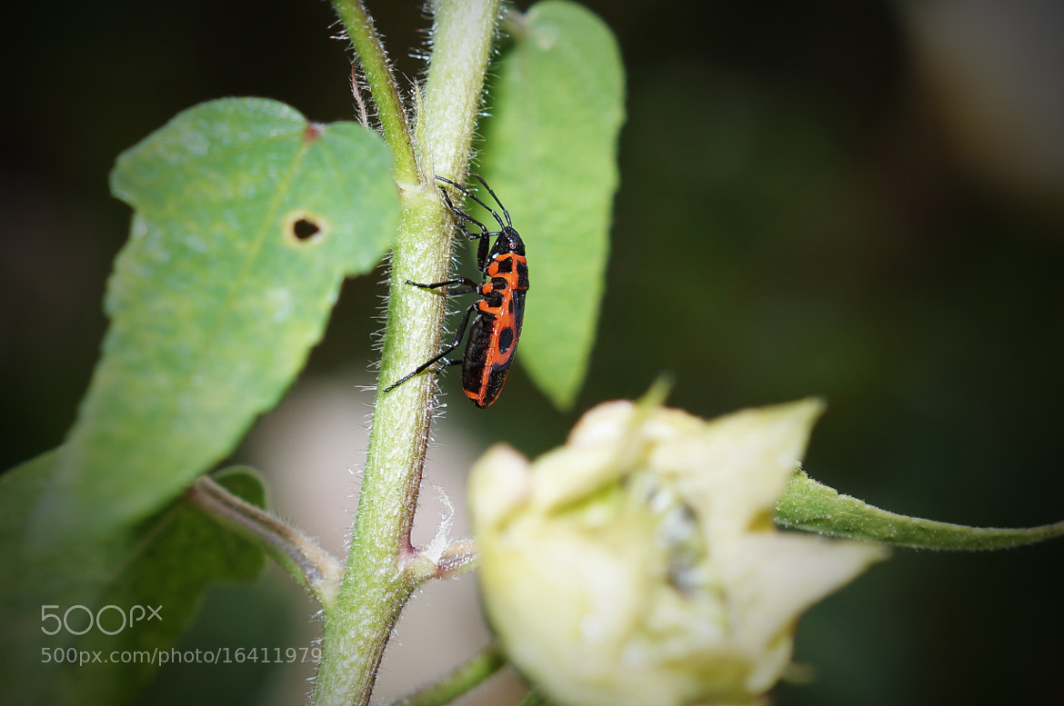 Photograph An insect by Krasimir Hintolarski on 500px