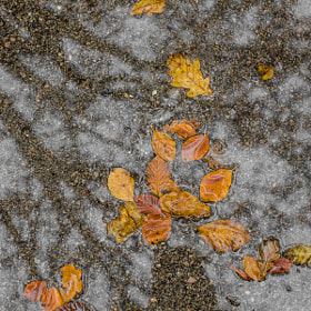 Fall 7 by Ove Bjerknes (Bjerknez)) on 500px.com