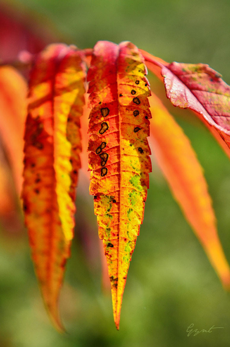 Photograph Autumn leaves by Gynt S on 500px