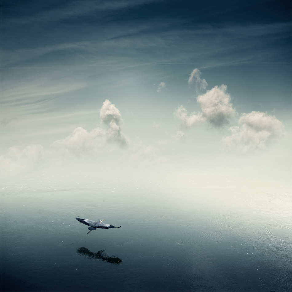 Photograph Flying to a Better Wolrd by Sylvain Rouvier on 500px