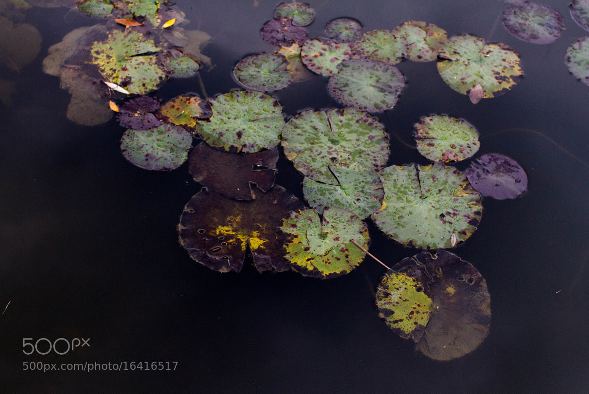 Photograph Fall Lillypads by Ash Furrow on 500px