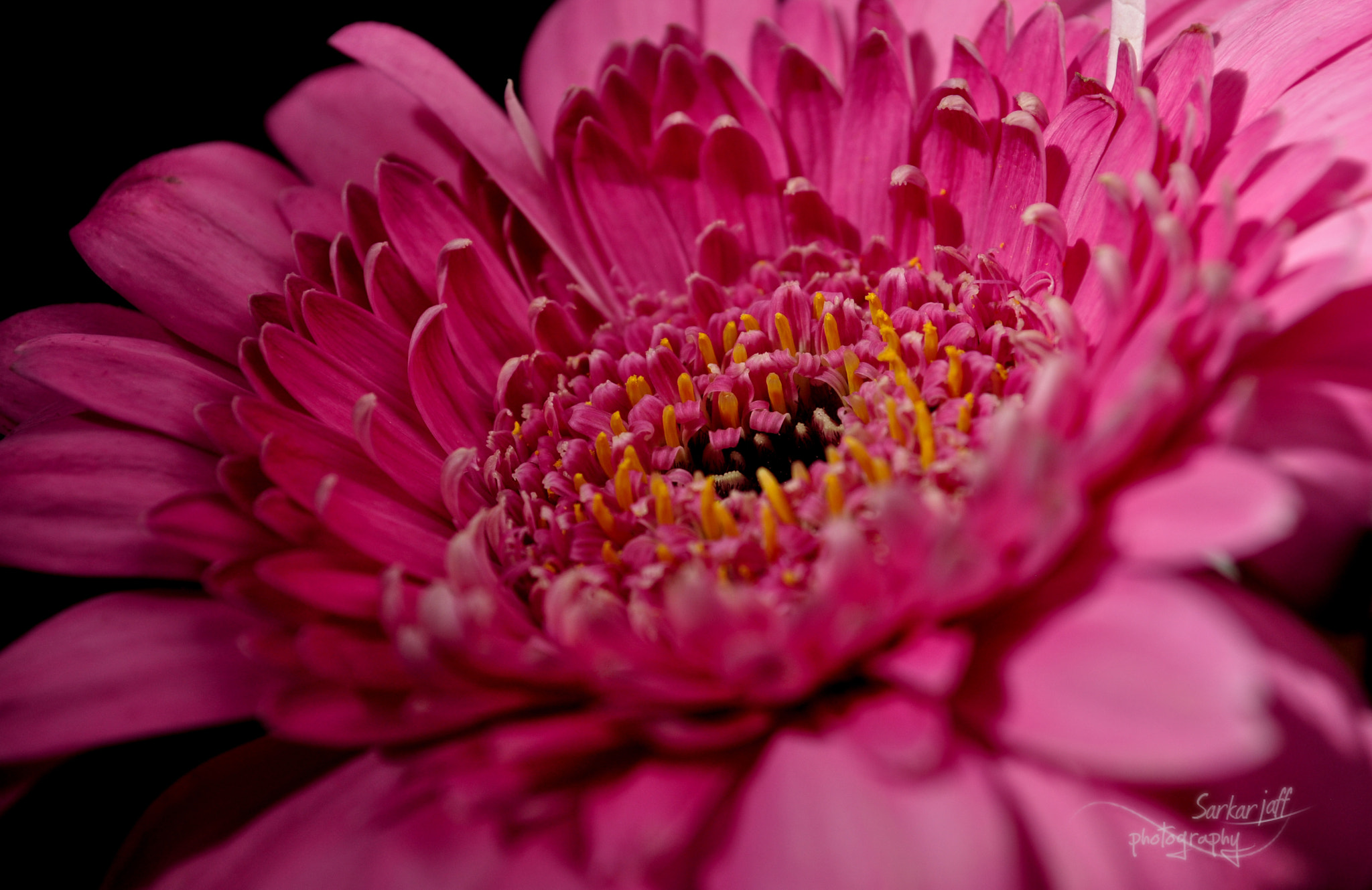Photograph Heart Gerbera by saro jaf on 500px