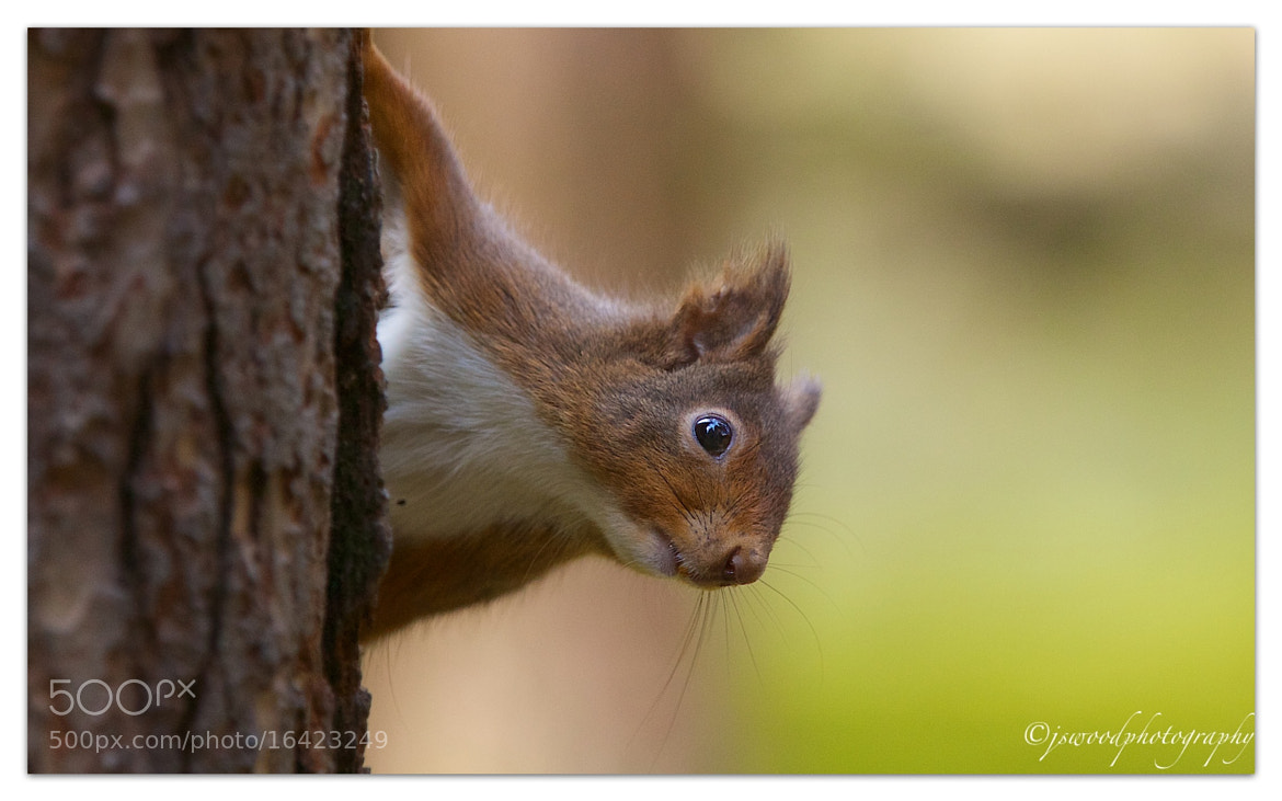 Photograph Cheeky Chappy….!! by Jason Wood on 500px