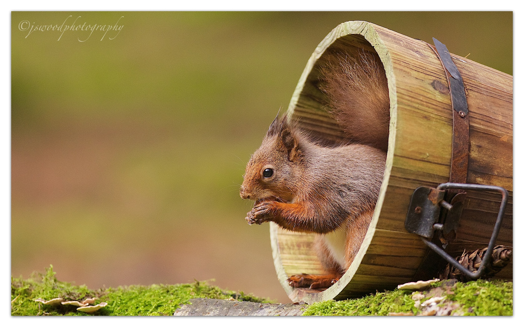 Photograph Red Squirrel by Jason Wood on 500px