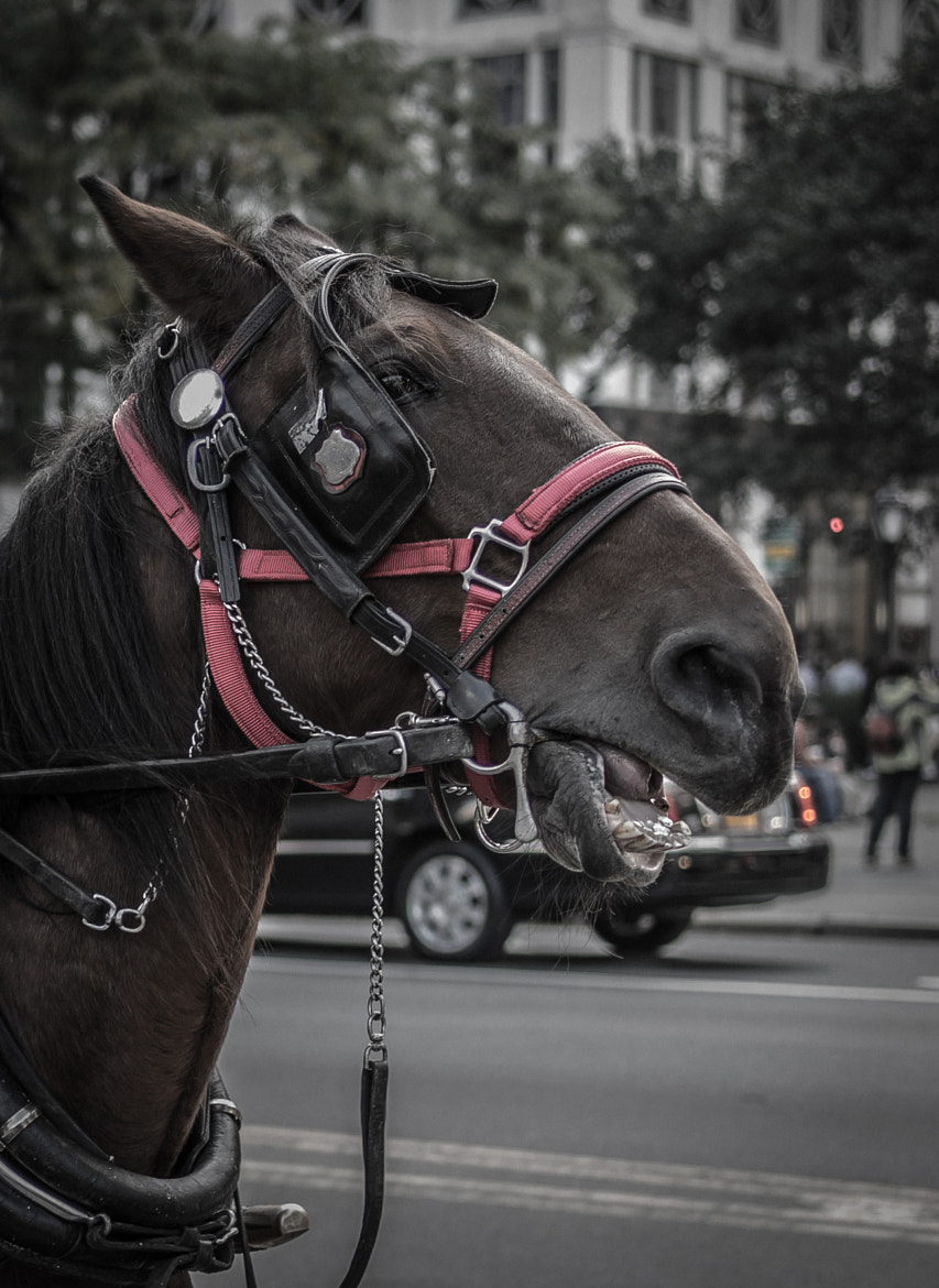 Photograph Horsing Around by Gil Garber on 500px