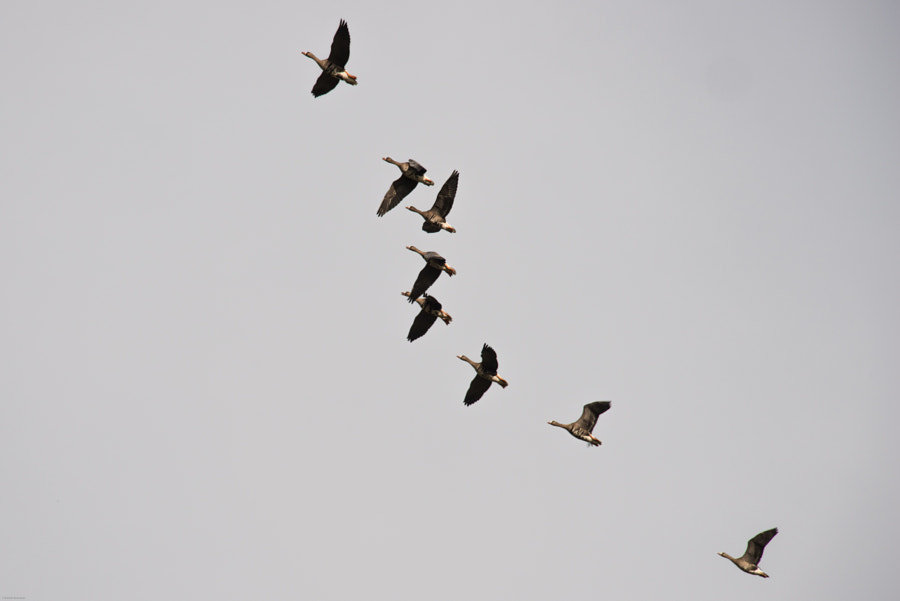 to see migratory birds flying is nice.