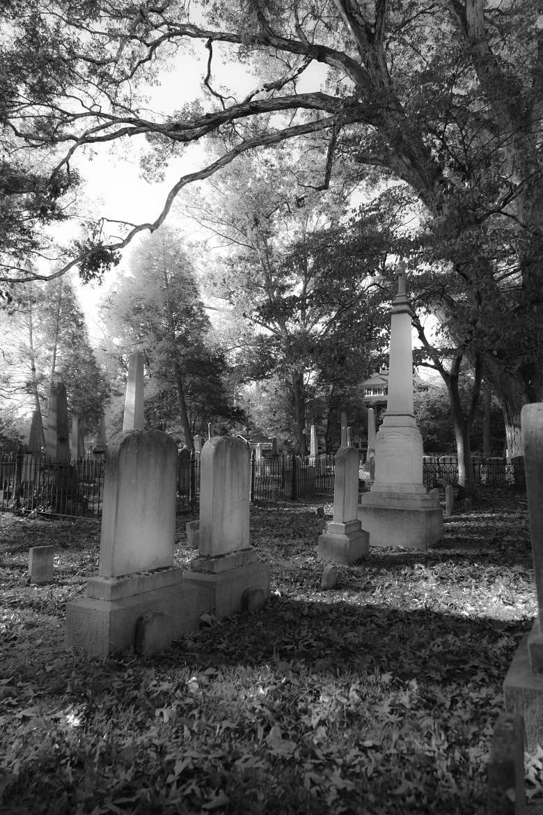 Photograph Cemetery 2 by Lowrey Holthaus on 500px