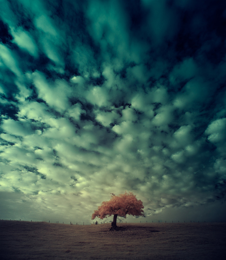 one two tree - summer by Andy Lee