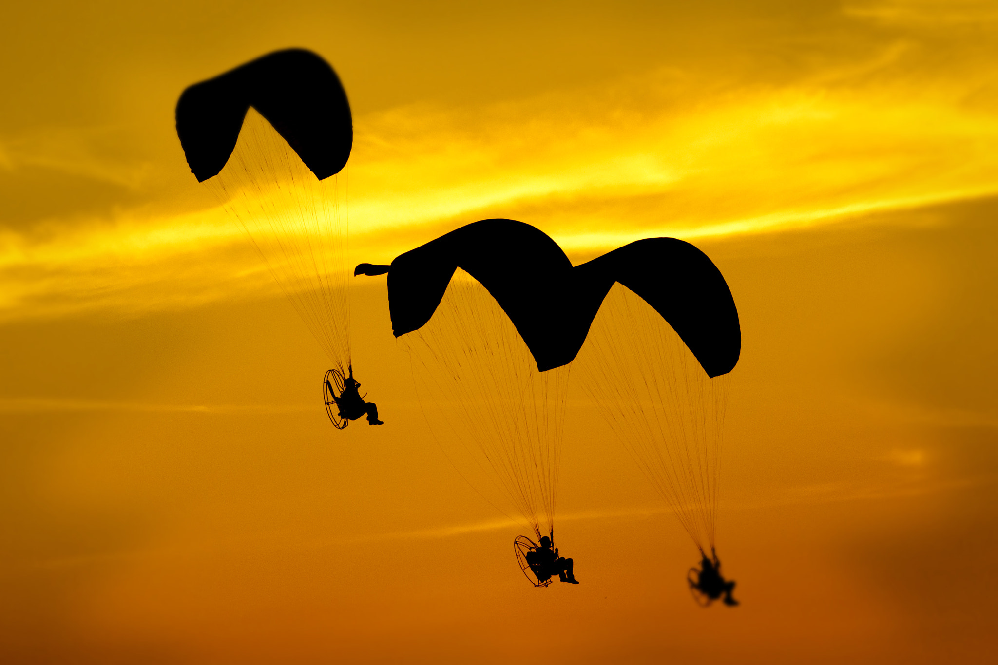 Photograph paraglider by CARLITO SO on 500px