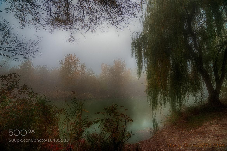 Photograph Autumn mist by Zdeno Kajzr on 500px