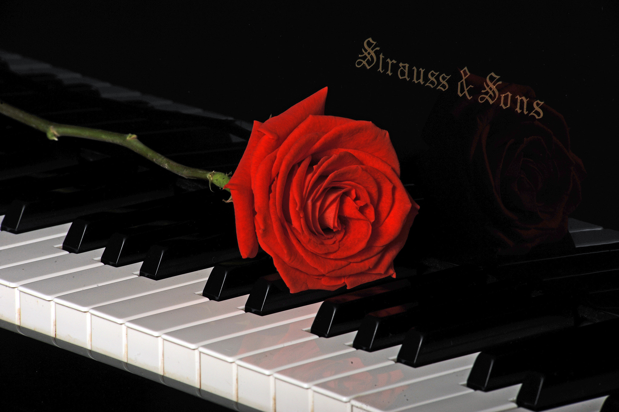 Photograph Red Rose and piano  by Cristobal Garciaferro Rubio on 500px