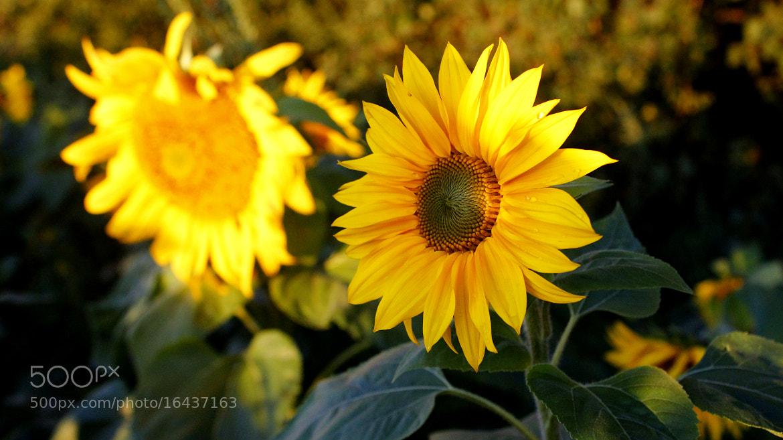 Photograph The Sun on Earth by Tanasa Alin on 500px