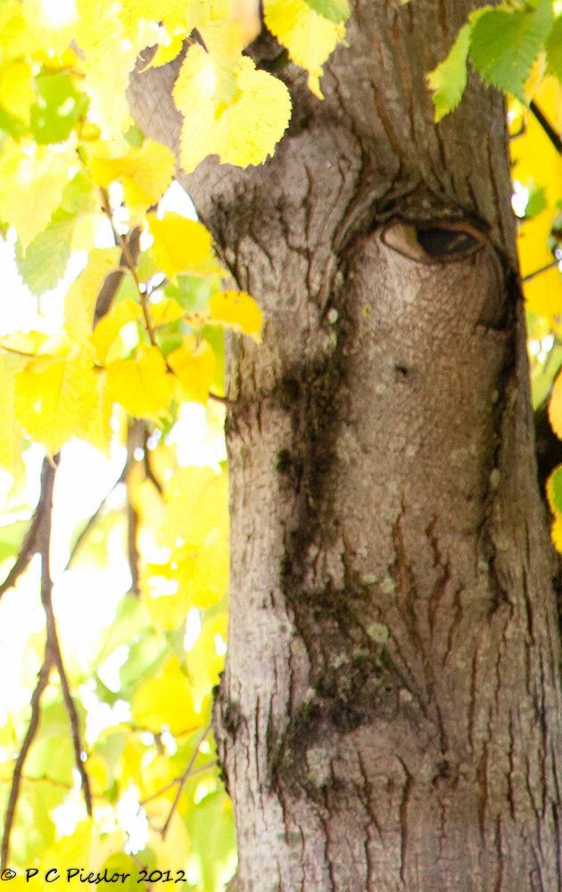 Photograph Face tree by Pete  Pieslor on 500px