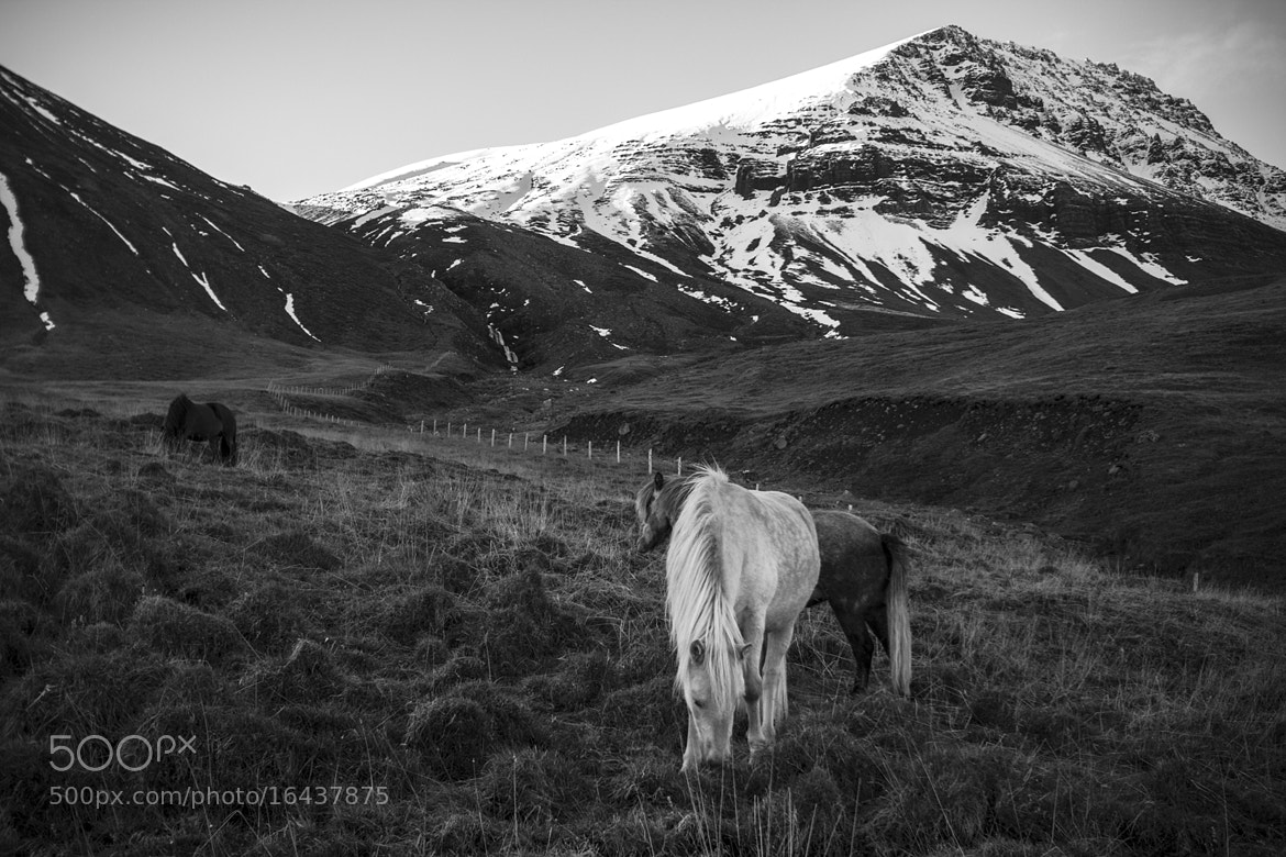 Photograph Grazers by Evan McAlister on 500px