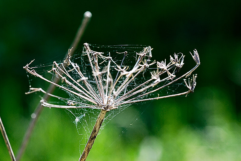 Photograph Cobweb (Spinngewebe) by Margarita from Klaipeda on 500px