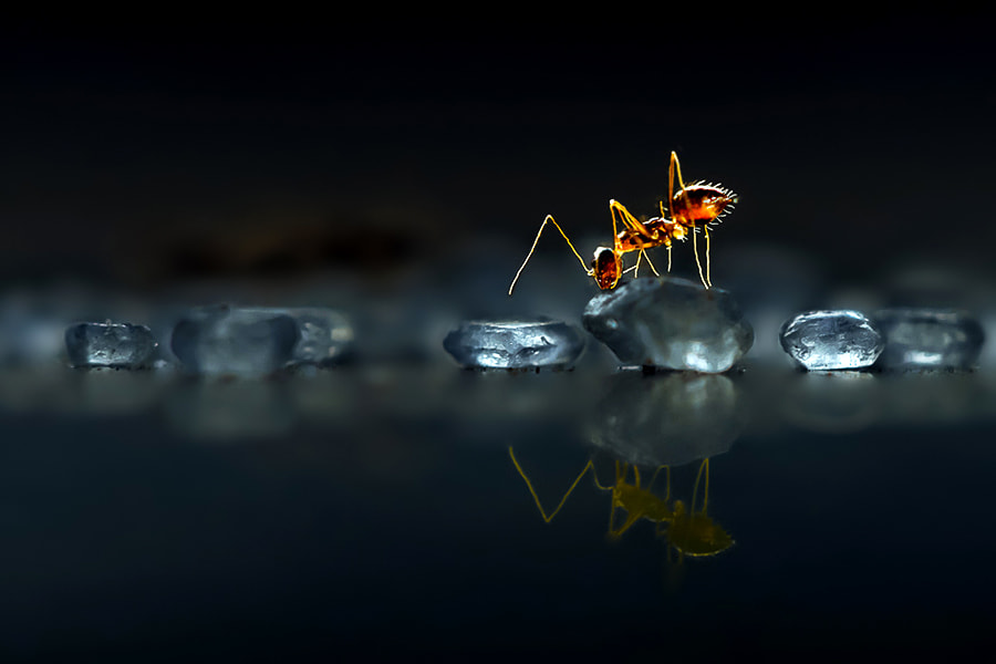 Photograph Little World by Nitin  Prabhudesai on 500px