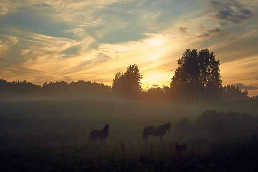 Evening grazing by Jere Ketola on 500px.com