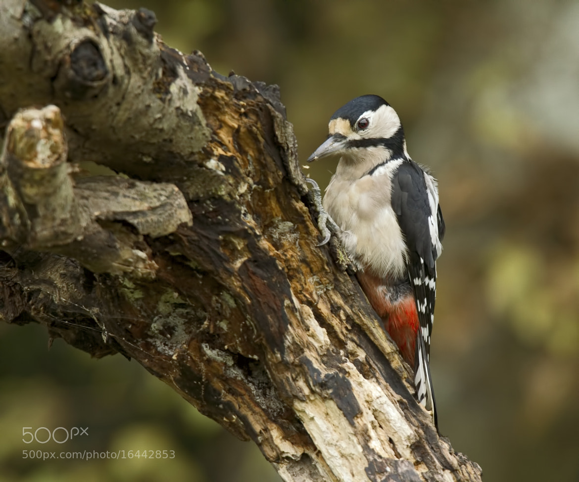 Photograph Woody at Work! by Sylvia Fresson on 500px