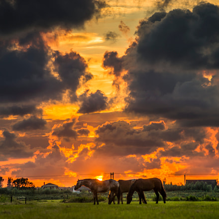 Summer sunset with horses, Sony SLT-A99V, Tamron 200-400mm F5.6 LD