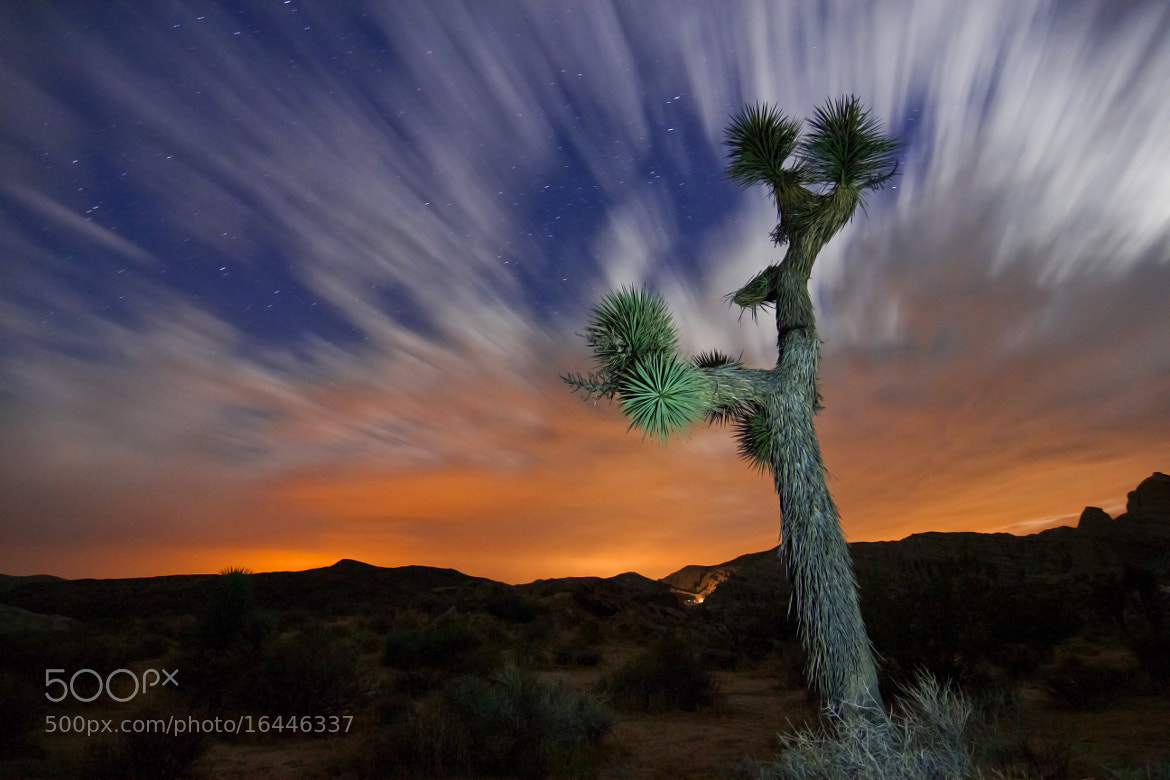 Photograph Red Rock Canyon Joshua Tree by Karl Klingebiel on 500px