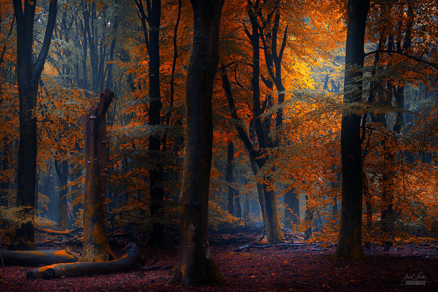 Somewhere i belong by Janek Sedlar on 500px.com
