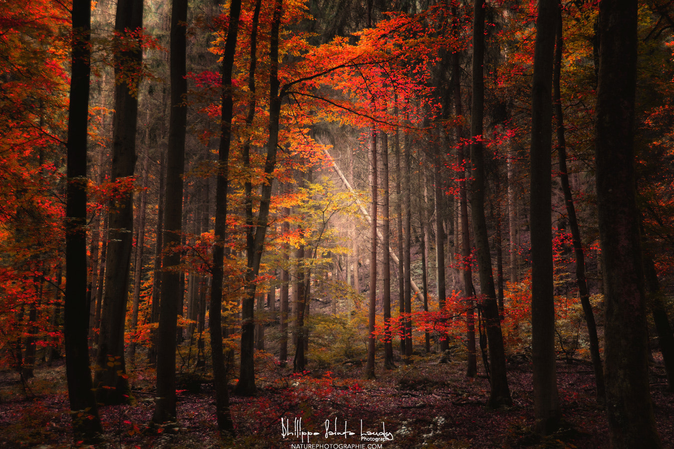 Photograph Orton Wood by Philippe Sainte-Laudy on 500px