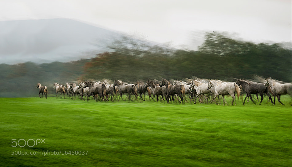 Photograph Guide herd by Milan Malovrh on 500px