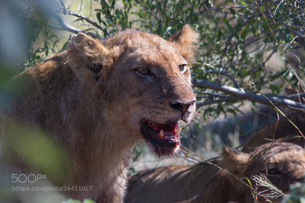 Photograph Portrait of a Huntress - Competition 3 of 5 by Marcus Tejessy on 500px