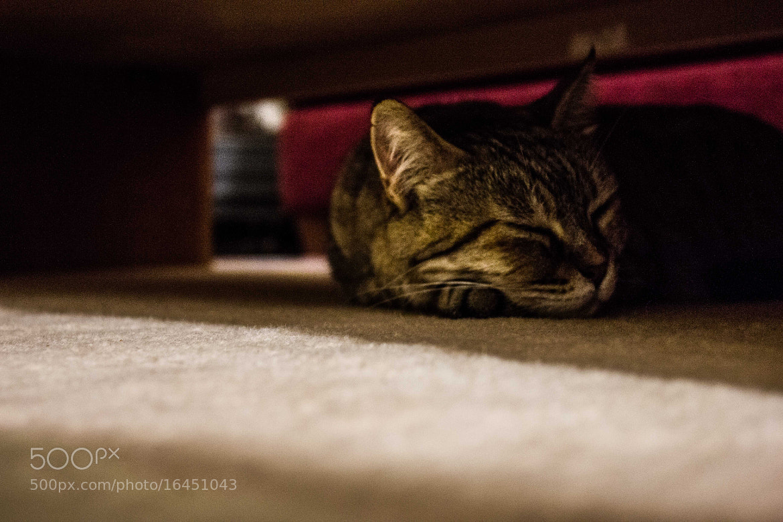 Photograph Sleeping Cat... by Roy Rozanski on 500px