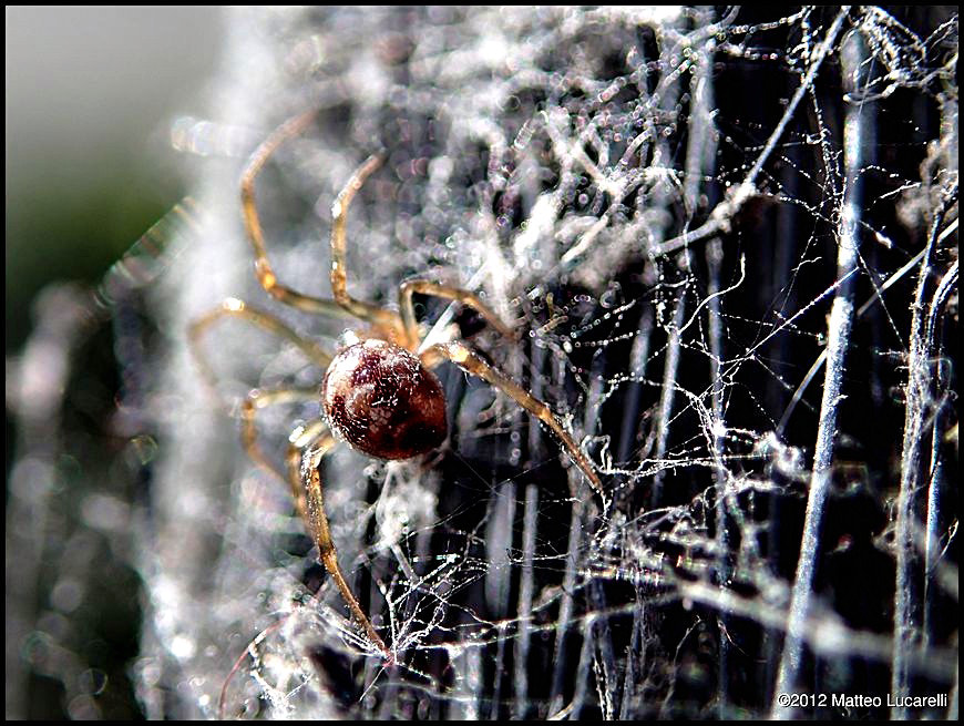 Photograph Spider on the broom by Matteo Lucarelli on 500px