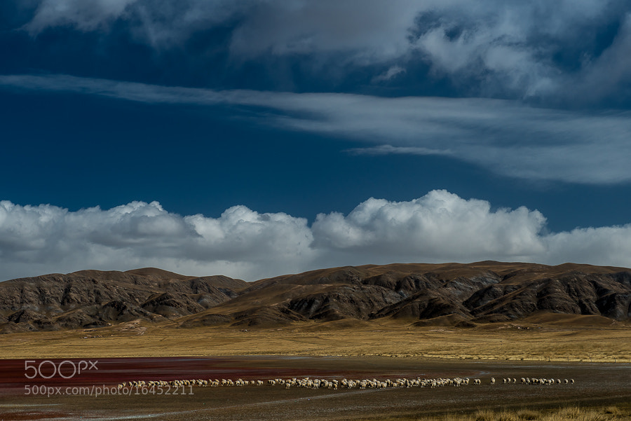 Sheep and Colored Layers by Evgeny Tchebotarev (tchebotarev) on 500px.com