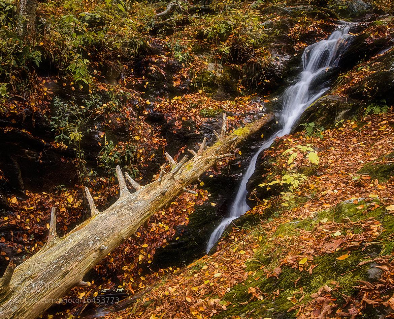 Photograph Dark Hollow Falls Cascade by Stevan Tontich on 500px